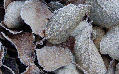 Avís per risc de fred a Bellaterra