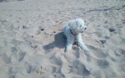 Platges per anar amb gossos
