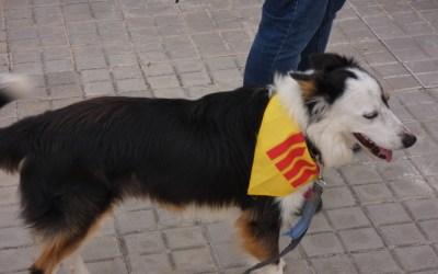 """""""Els Mossos m'han sancionat per passejar els gossos al camí dels dipòsits d'aigua"""""""