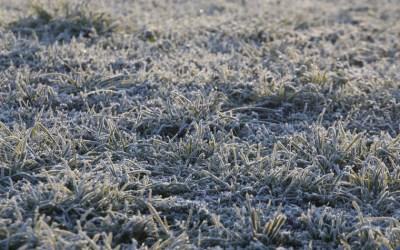 Estabilitat i fred a Bellaterra pel primer cap de setmana de l'any
