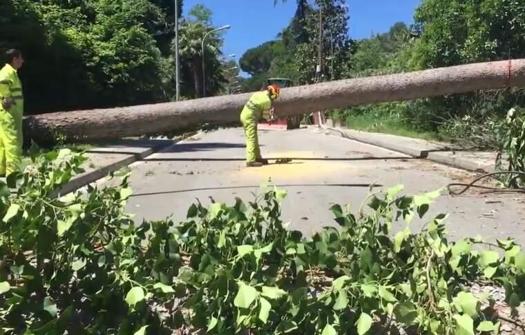 Operaris de l'empresa contractada per l'EMD tallen un dels troncs dels arbres caiguts al carrer Mestre Nicolau