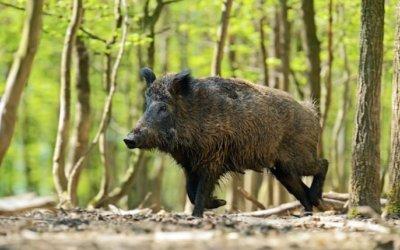 Dia de caça al Parc Natural de Collserola