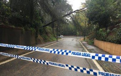 Retiren tres pins caiguts a Bellaterra