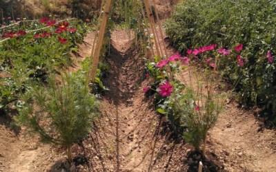 El Departament d'Agricultura aposta per la conservació de la biodiversitat cultivada