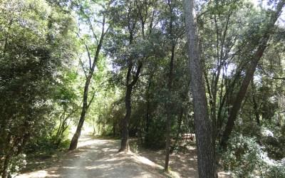 Aprovat definitivament el Pla especial de protecció del medi natural i del paisatge de Collserola