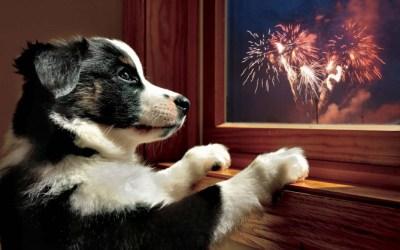 Què fer amb els gossos per Sant Joan? Recomanacions de FamilyCan Bellaterra