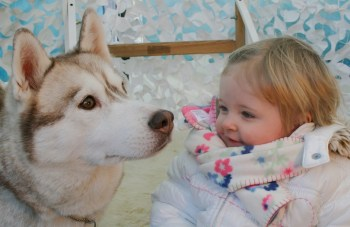 Husky and child