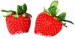 Berries by John Nyberg