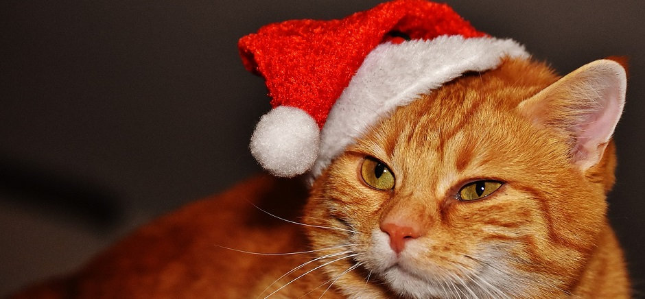 Relieving stress for pets at Christmas