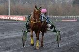course-chevaux-sulky