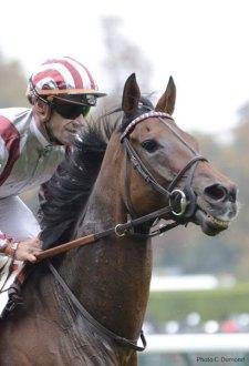 jockey-cheval