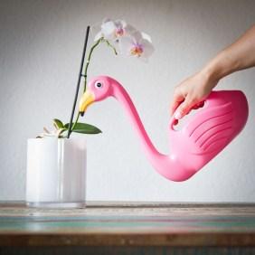 flamingo-gieter-468