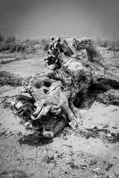 Driftwood 2...