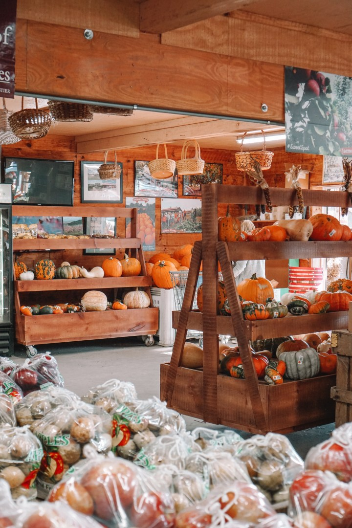 Jaemor Farms Farm Market with corn and pumkins and fall things
