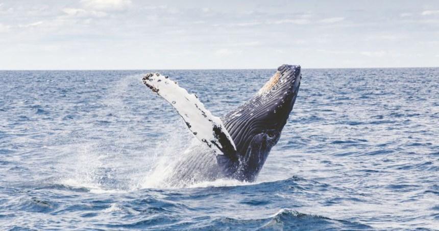 Lista di apparizioni della balena fuori da Moby Dick