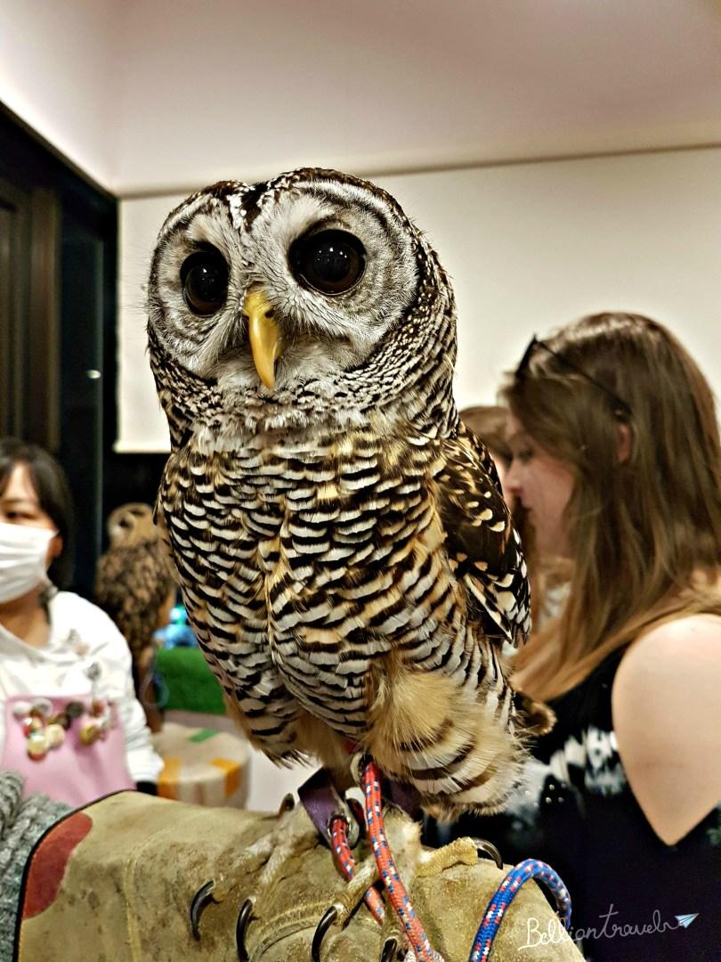 Owl(6)