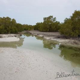Mangrove_03