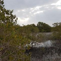 Mangrove_09