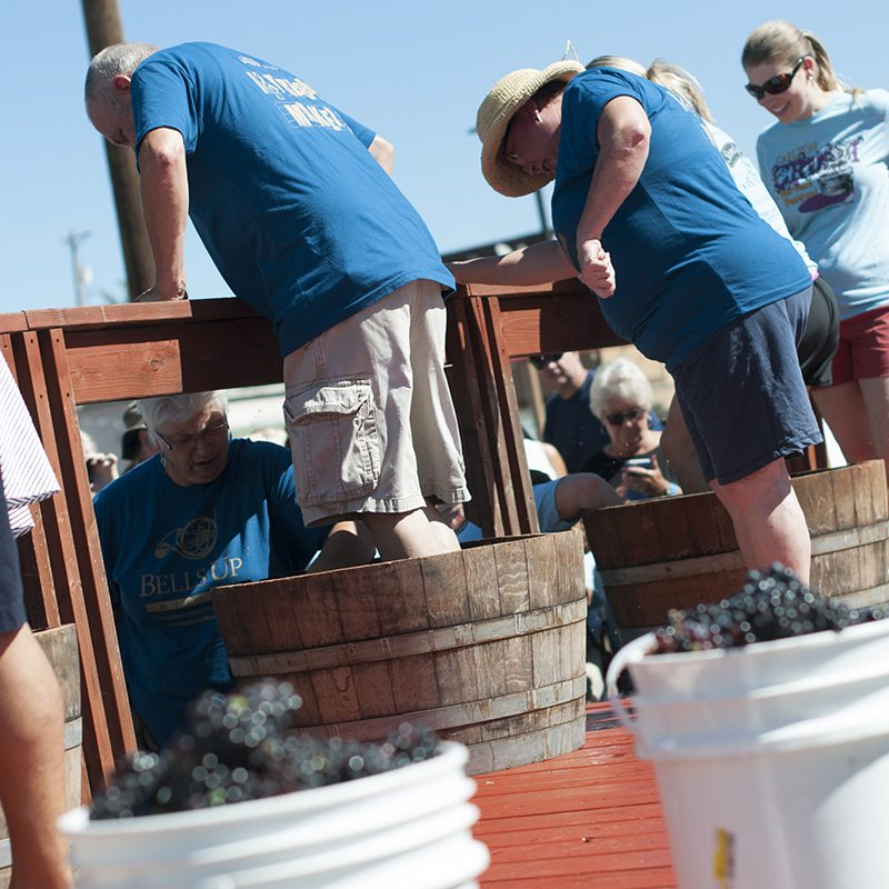 Photo by Shelley Collis of Collis Photography of the Bells Up Treble Maker grape stomp team.