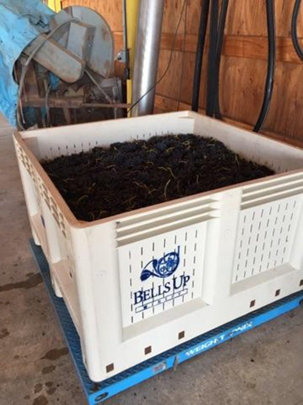 Bells Up processes pinot and syrah during harvest 2016.
