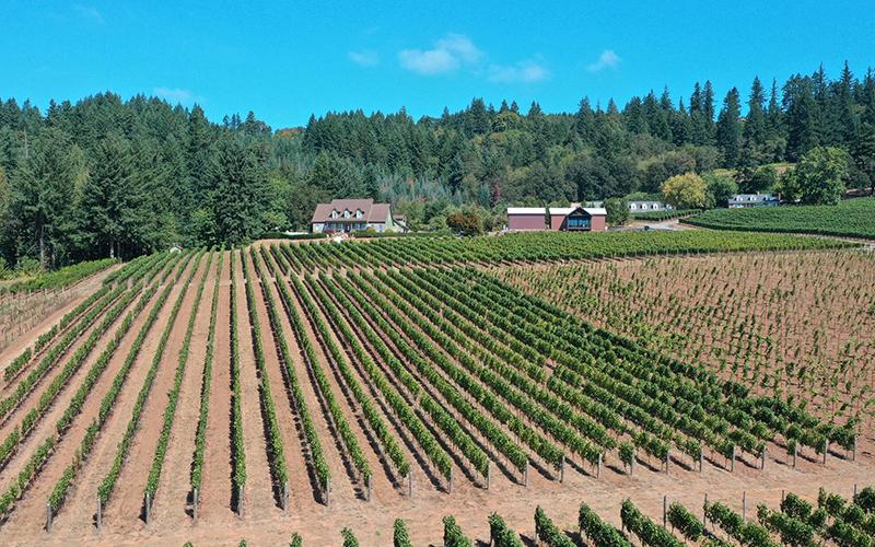 Aerial view of a vineyard