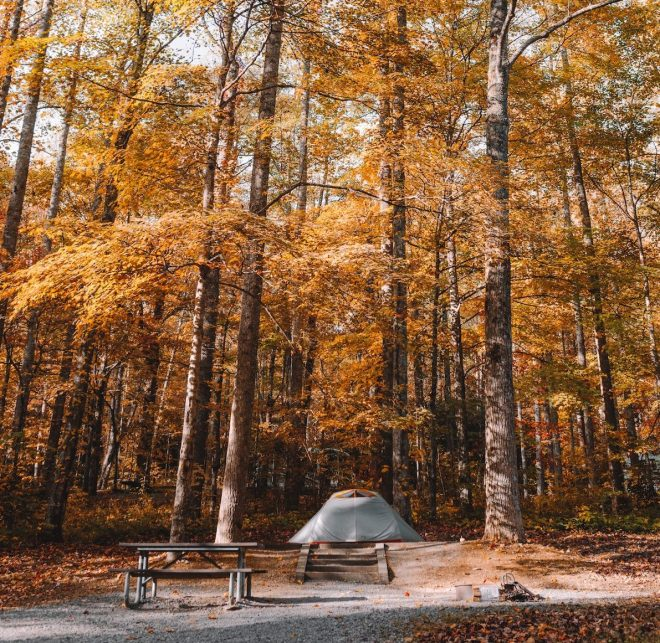A Great Smoky Mountains campsite in fall with tall, yellow trees surrounding a picnic table, for first family camping trip. Photo by Andrew Neel on Unsplash