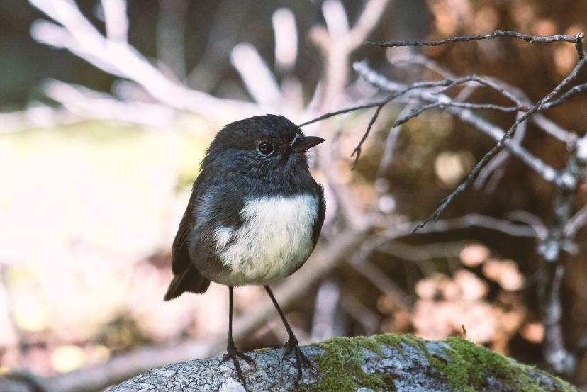 Birdwatching | Photo by Phil Botha on Unsplash