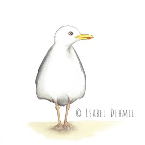 Die Möwe (1) - Illustration von Isabel Dehmel