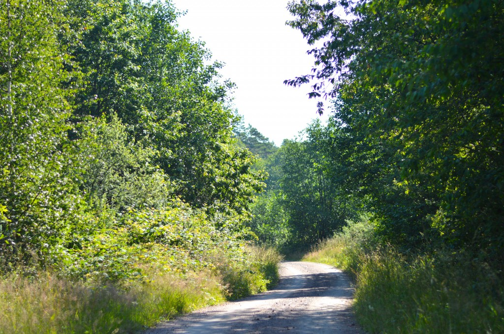 path camp