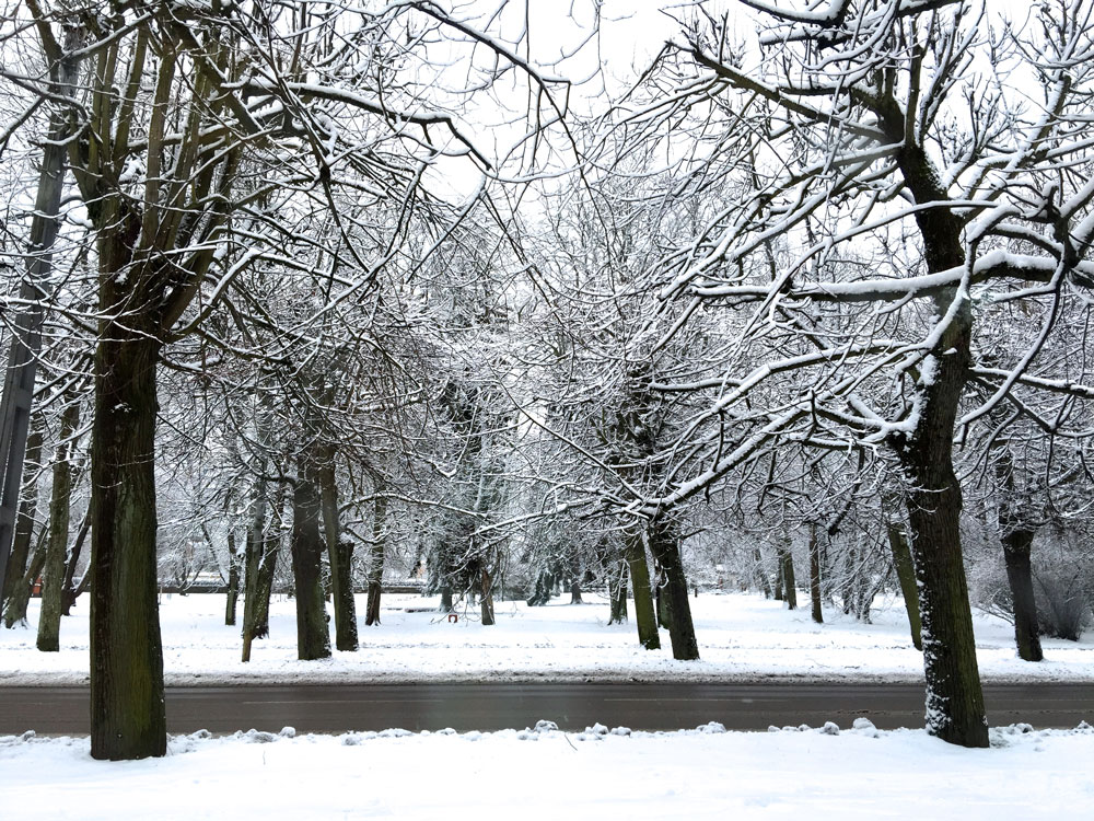 norrkoping-snowy-trees