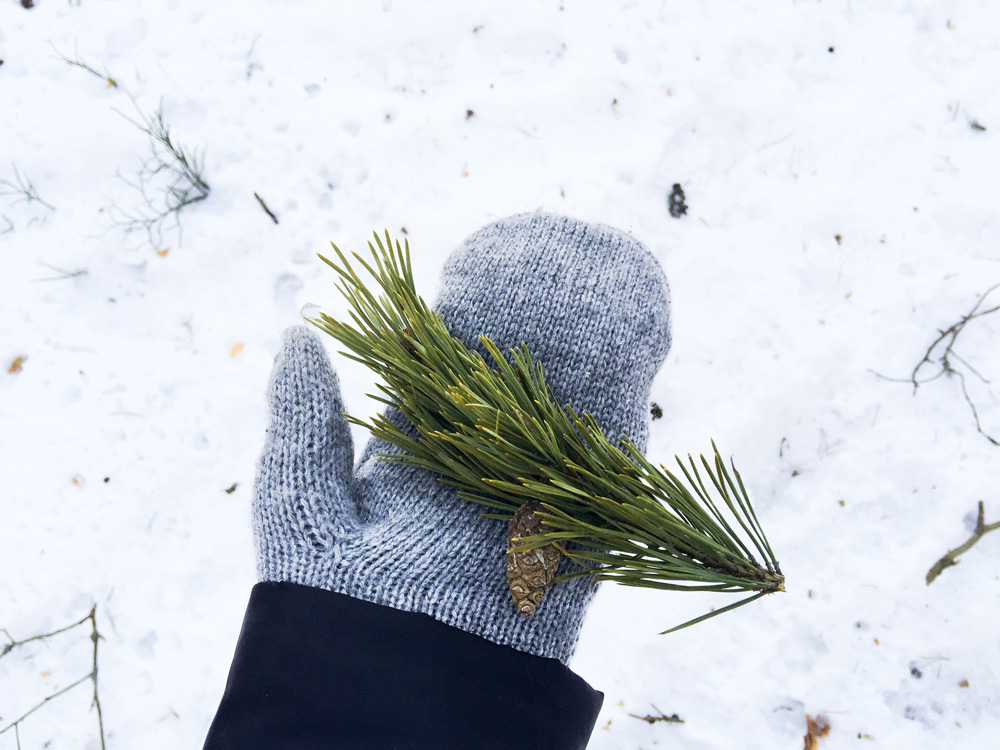evergreen-nature-snow