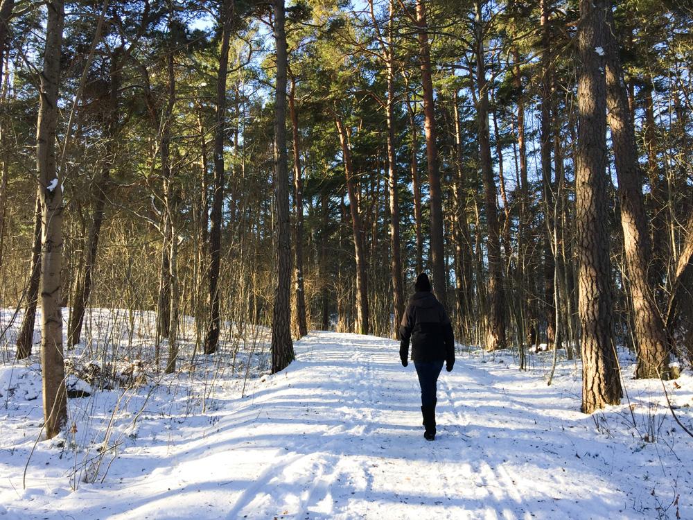 forest-winter-walk