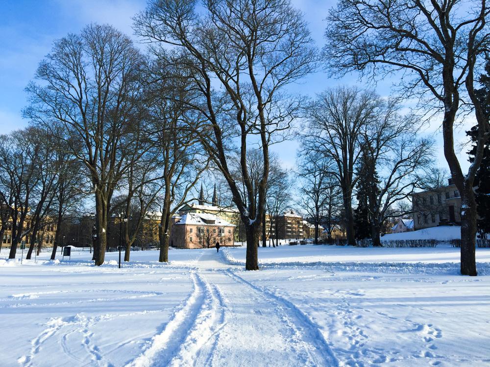 park-snow-walk