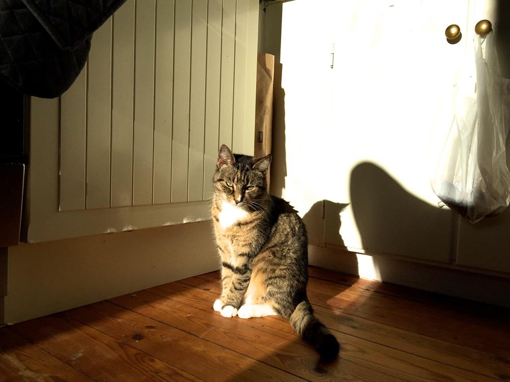 18-zola-cat-sunshine