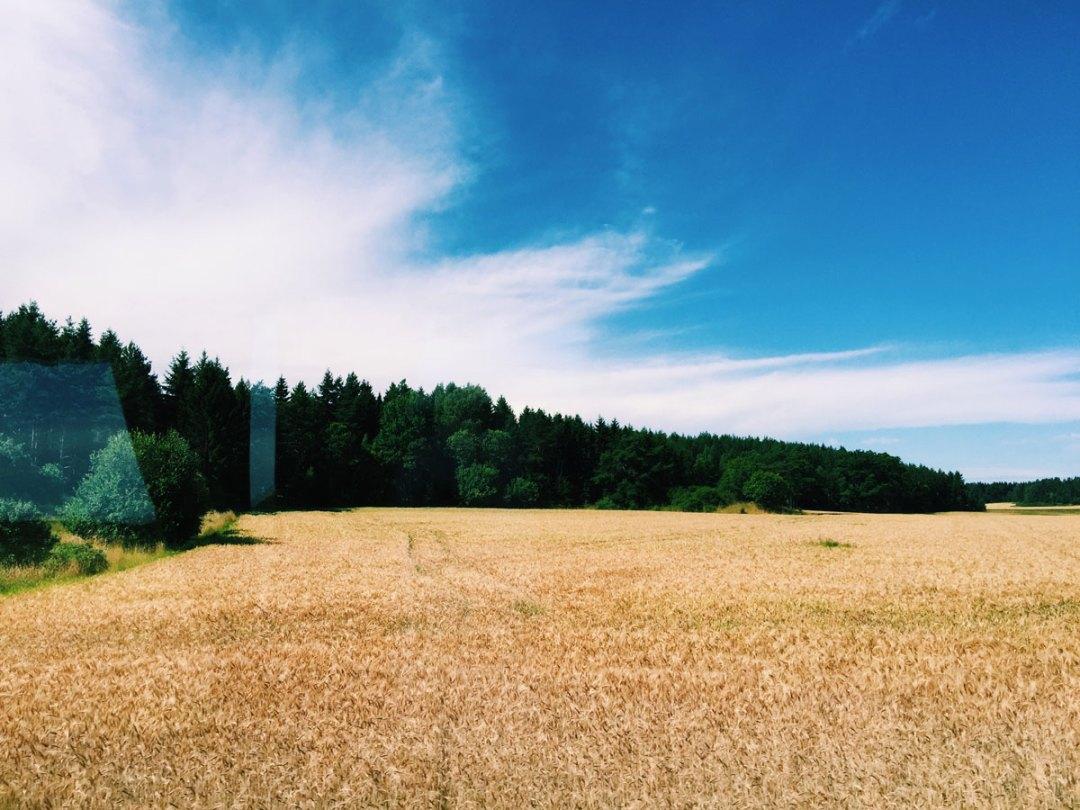 sigtuna-fields