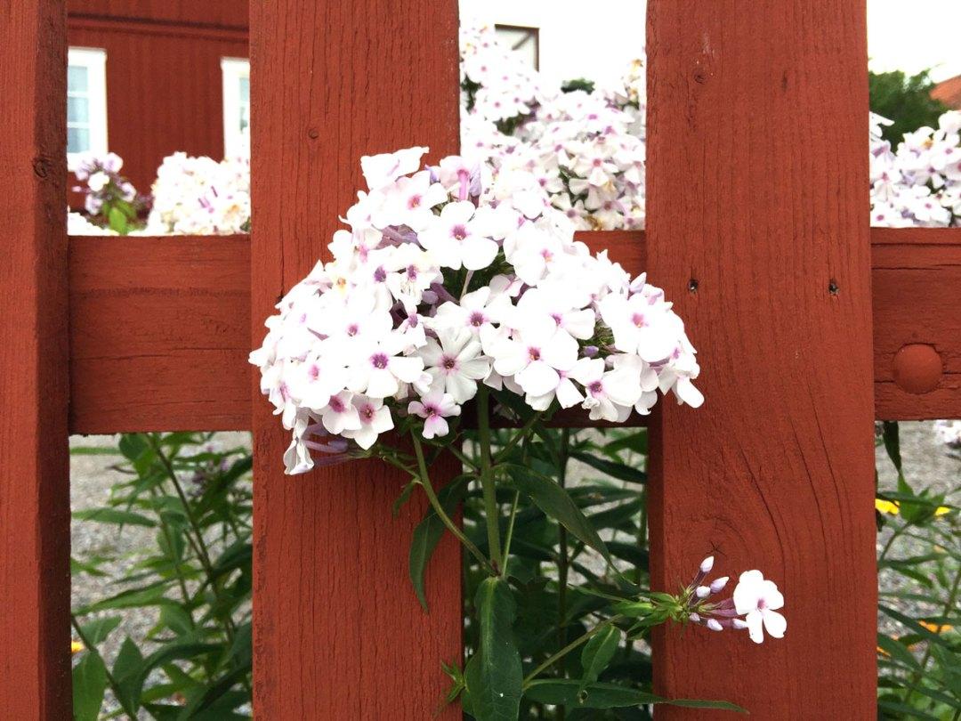 sigtuna-flower