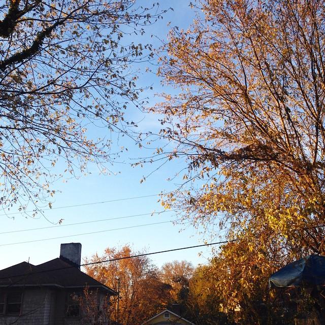maxwell street autumn