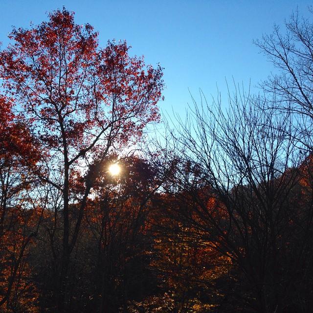 sunset autumn trees
