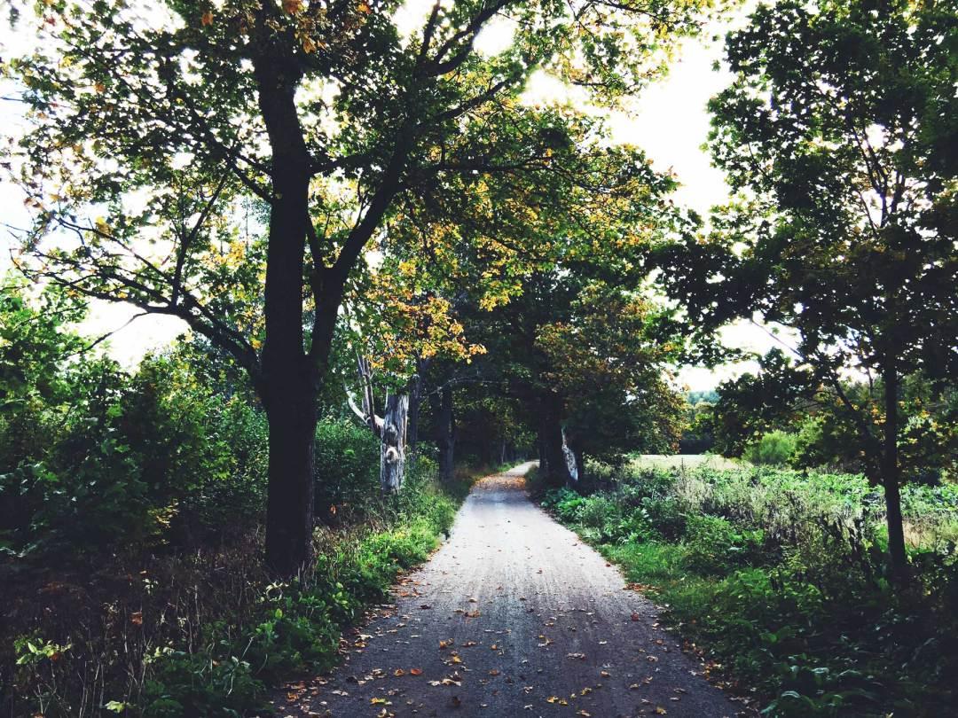 autumn-path-
