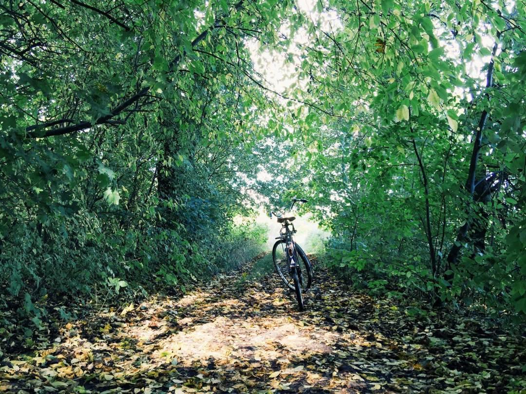 bike-trees