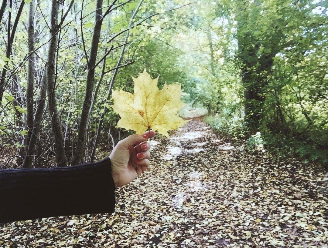 leaf-hand-trees