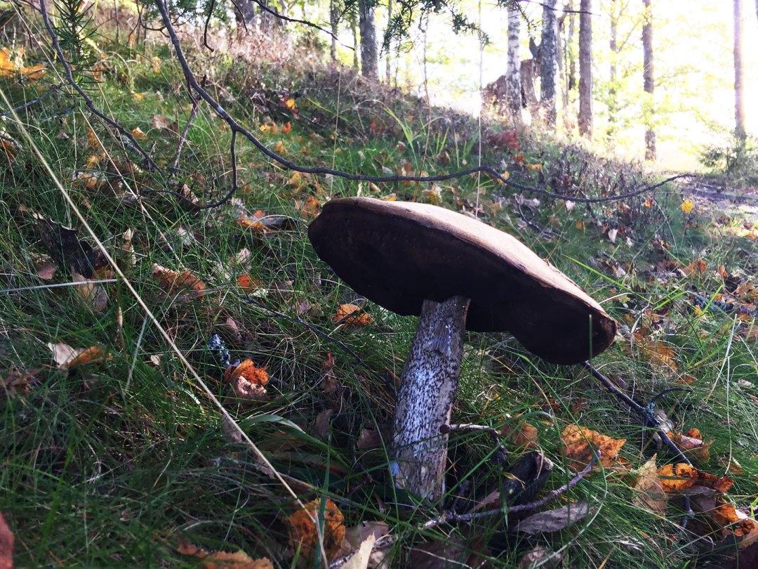 mushroom-surahammar-life-coach