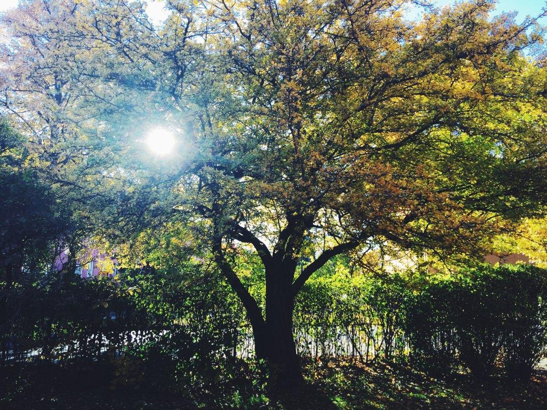 tree-sunshine