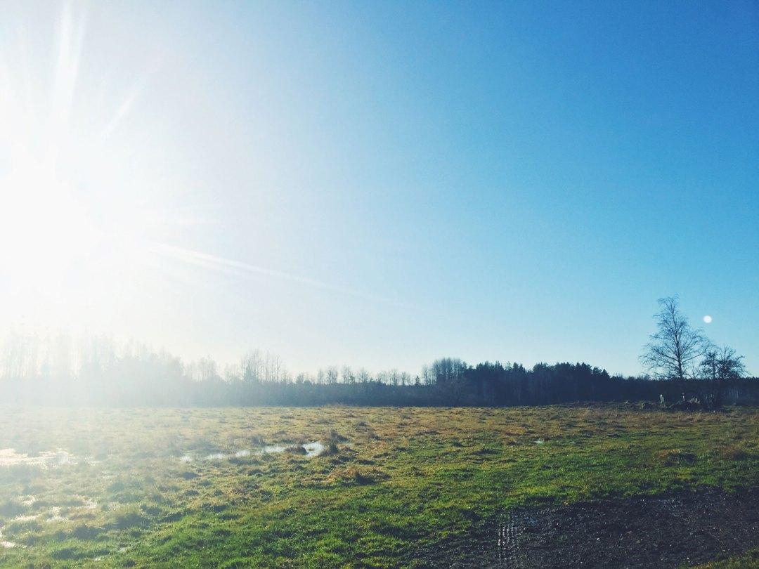 life-coach-field-sun
