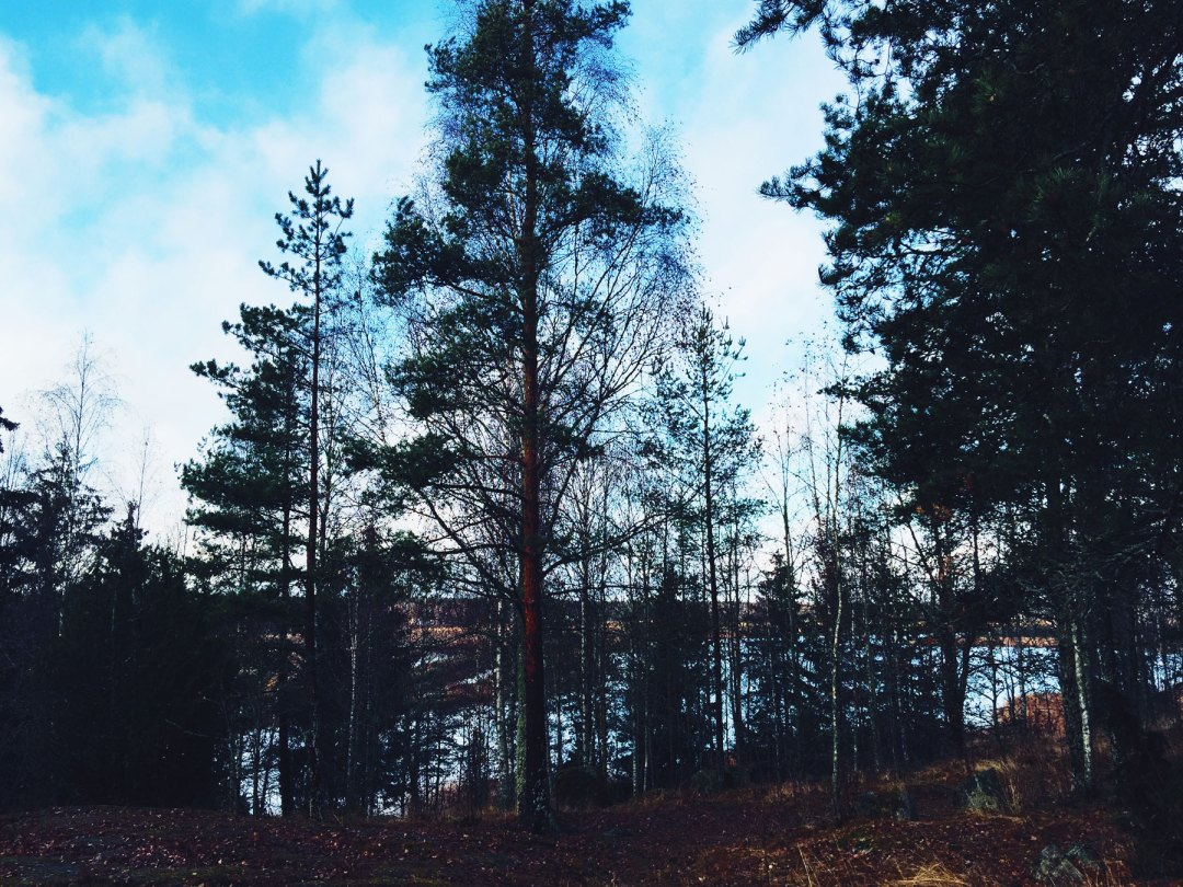 life-coach-forest-