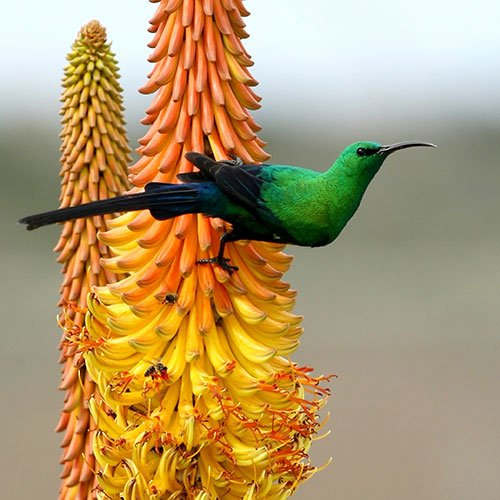 Knysna Birdwatching