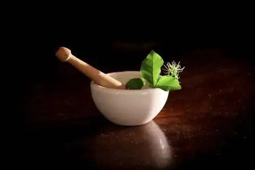 11-plantas-medicinais-para-as-gravidas Antibióticos naturais para combater infecções,dores e doenças