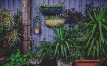 plantas para espaços com pouca luz