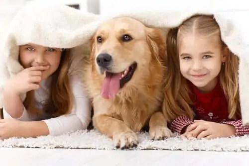 por-que-o-amor-pelos-animais-e-importante Filmes que ensinam as crianças sobre o amor dos animais