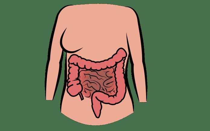 intestino_1579963978-1024x640 Benefícios do chá de sene para saúde | Bemaisaúde
